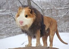 hybrid-animals9