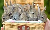 basket of bunnies!