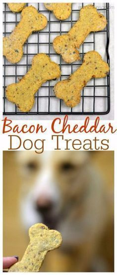 DIY Pet Recipes For Treats and Food - Bacon Cheddar Homemade Dog Treats - Dogs, Cats and Puppies Will Love These Homemade Products and Healthy Recipe Ideas - Peanut Butter, Gluten Free, Grain Free - How To Make Home made Dog and Cat Food - diyjoy.c #catsdiyhomemade