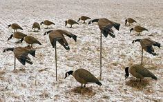 Canada Goose Magnet Decoy : Cabelas