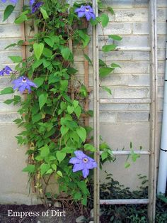 Hang onto those old ladders. They have lots of uses in the garden.