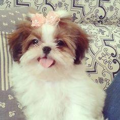 Lola's new sister!