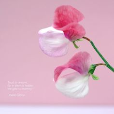 Daily Colours - Flowers and Quotes