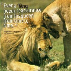 Discover and share King And Queen Quotes And Sayings. Explore our collection of motivational and famous quotes by authors you know and love. King Queen Quotes, Queen Mama, Animals And Pets, Cute Animals, Funny Animals, Lion Couple, Leo Quotes, Lion And Lioness, Lion Love