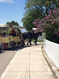 Mackinac Island - The kids will be surprised with this 2 hour tour around the island. They may even be old enough to ride horses this time!