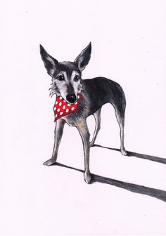 Mulberry the lurcher. Custom colour pencil drawing https://www.etsy.com/listing/216347712/custom-pet-portrait-by-jim-griffiths