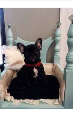 Our Frenchie in an Upcycled bed I made her;)