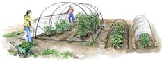 Make an Easy, Inexpensive Mini-Greenhouse With Low Tunnels    Learn how to make an easy, affordable mini-greenhouse using row covers and low tunnels for season extension and natural pest control. | Mother Earth Living