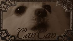 Gabe the dog channel: the can can Hilarious, Funny, Classical Music, Dog Pictures, Singing, Channel, Songs, Cool Stuff, Hilarious Pictures