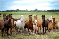 Miniature Horses by reitenworks, via Flickr