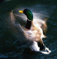 """""""still hurry bird"""" by Johann Smari: Found on Flickr."""