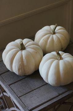 pumpkin Casperita