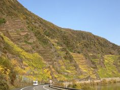 Bremmer Calmont, perhaps the steepest vineyard in the world.  Mosel River Valley, Germany.