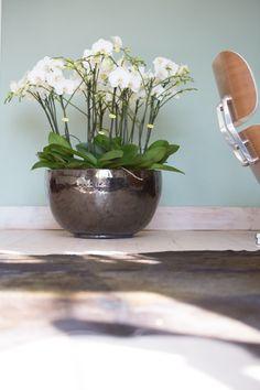 Opti-Grandi #Opti-flor #Style #Deco #Phalaenopsis #Orchids