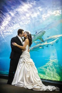 Talk about a photobomb! Danette and Mark wed at Camden's Adventure Aquarium.