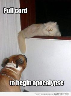 """55 Funny Cat Memes - """"Pull cord to begin apocalypse. Funny Cat Memes, Funny Cute, Funny Dogs, Funny Stuff, Cat Stuff, Funny Drunk, Farts Funny, Hilarious Sayings, Funny Animals"""