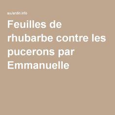 Feuilles de rhubarbe contre les pucerons par Emmanuelle