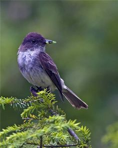 purple bird   ... colored birds i have found images of a purple bird a rainbow bird