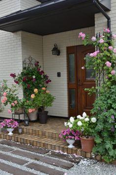 バラいっぱいの玄関編〜家を植物で飾ろう〜 – GardenStory (ガーデンストーリー) Cafe Plants, House Plants, Container Plants, Container Gardening, Cottage Front Porches, Art Deco Dress, Garden Design Plans, Modern House Design, Amazing Gardens