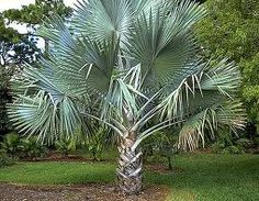 You can grow certain types of palm trees in Nebraska.