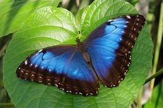 exotic butterfly pics | Exotic Butterfly 1