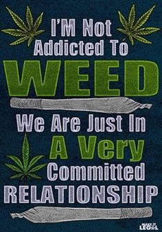 No Bad Haze is a Canadian Dispensary online for cannabis products. Buy weed from No Bad Haze without any doubts. Weed Jokes, Weed Humor, Medical Marijuana, 420 Memes, Stoner Quotes, Stoner Humor, Stoner Art, Smoking Weed, Smoke Weed