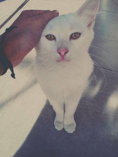My cat #King