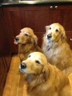 3 Goldens