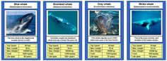 Animal Trumps cards. Identifying organisms.