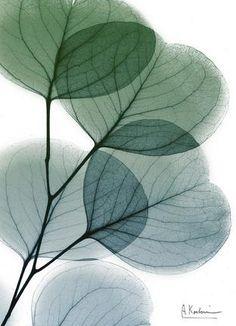 Watercolor Leaves, Floral Watercolor, Watercolor Paintings, Flower Wallpaper, Wallpaper Backgrounds, Wallpapers, Deco Floral, Plant Art, Plant Illustration