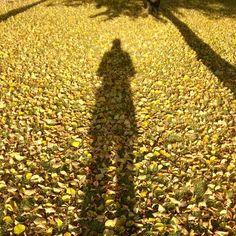 Sunnuntaikävelyllä.Enjoying the energy of autumn light and colors #syksy#syksynvärit#kontrasti#valostavarjoon#autumn#autumncolors#shadowplay#momentsofmylife