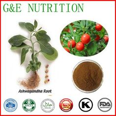 Top Qualit From 10 Years experience manufacture ashwagandha extract 1000g