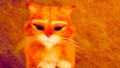 рыжие коты - Поиск в Google