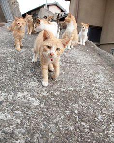 "From Catloversclub"" cats, kitten, kitty, meow ...."