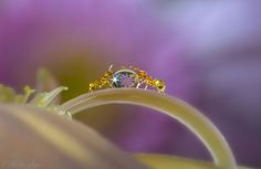 Photo ShowTime by Miki Asai on 500px