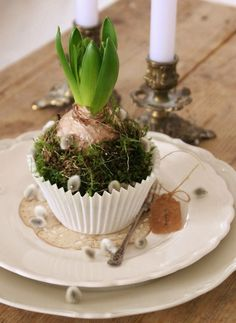 Osterdeko auf dem Tisch -hyazinth-muffinform-moos-weidenkaetzchen