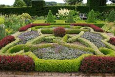 Knot garden od Buxus and Berberis