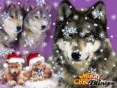 merry christmas wolves | Christmas Wolves Picture #119711707 | Blingee.com