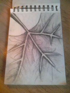 Leaf pencil drawing