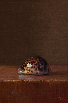 Abbey Ryan - Pohnpeian Cowry Shell 6 x 4 inches