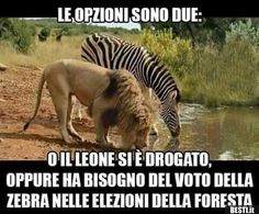 Cross Species Interactions Lion with Zebra at Drinking Hole Animals And Pets, Funny Animals, Cute Animals, Wild Animals, Funny Jokes, Hilarious, Trophy Hunting, Animal Activist, Tier Fotos