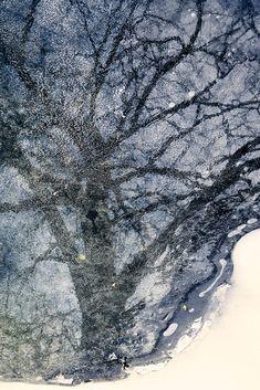 Tree on Ice (Milwaukee, Wisconsin) by Ursula Abresch on 500px