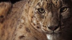 Snow leopards, ancient zero and Cassini's big finish