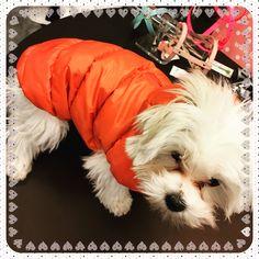 Per questo inverno Lucy ha scelto @ilovemydog_official  #treviso #minupetshop #ilovemydog