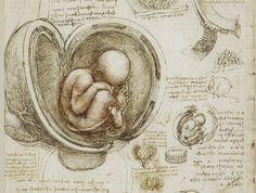 La Royal Collection Trust di Buckingham Palace ha reso disponibili decine di disegni fatti da Leonardo Da Vinci e che riguardano lo studio dell'anatomia e del corpo umano.