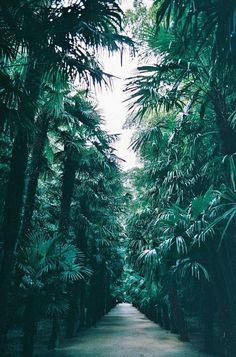 Follow the palms!