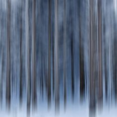 Trees #Icm  trees, winter, blue, abstract, white, lines, grey, vertical, icm, logs, intentional camera mouvement