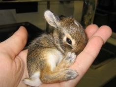 Even when your day is crappy, who can't smile at a baby bunny!!!