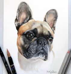 Ruby - French Bulldog Frenchie. Our Furry Companions in Animal Drawings. By Kelly Lahar.