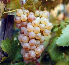 Weekend in Riviera Ligure di Ponente tra fiori, olio e vino